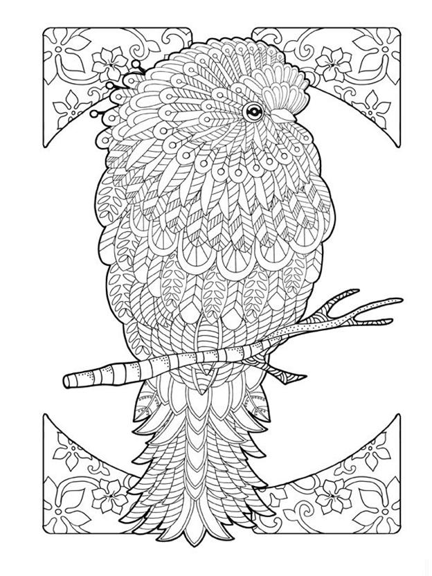 Сложная схема шаблон Попугай