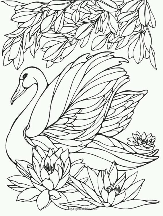Схема контурного квиллинга лебедь кувшинки листья
