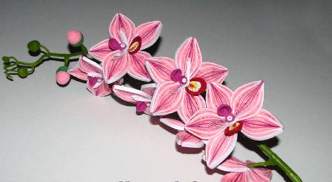 Веточка с объёмными бумажными цветками квиллинг Орхидей