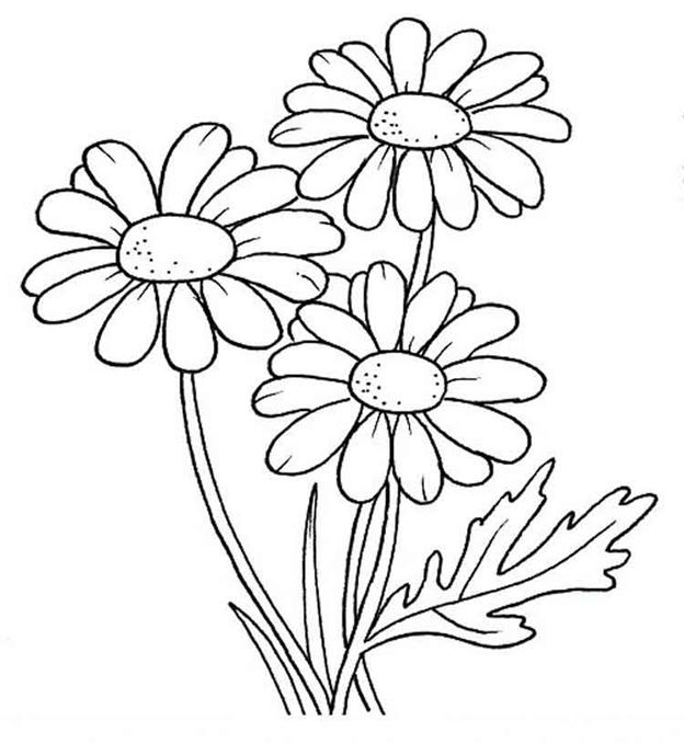 Цветы ромашки трафарет
