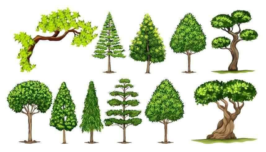 Квиллинг деревья