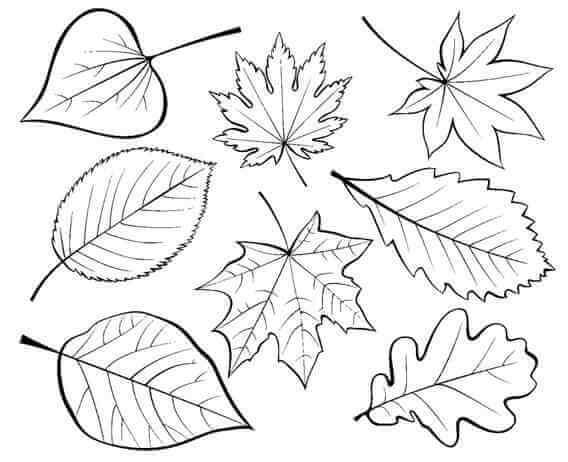 Схема шаблон бумажных листьев