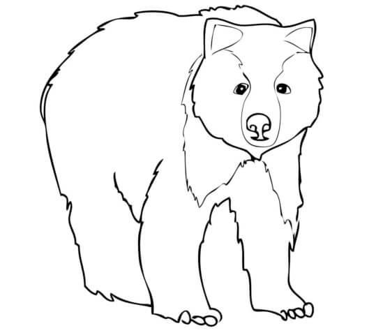 Схема шаблон бумажного медведя