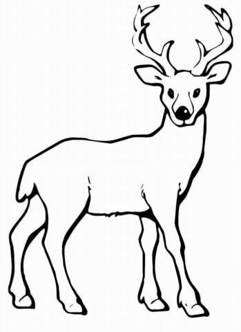 Схема шаблон бумажного оленёнка