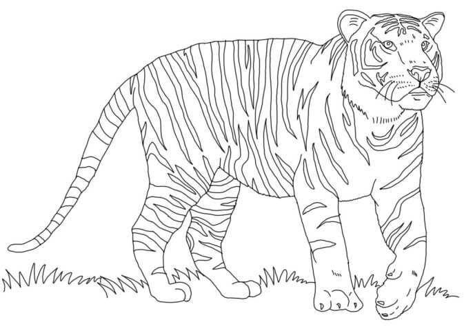 Схема шаблон бумажного тигра