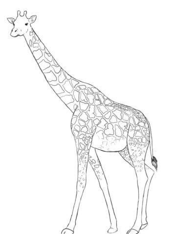 Схема шаблон бумажного жирафа