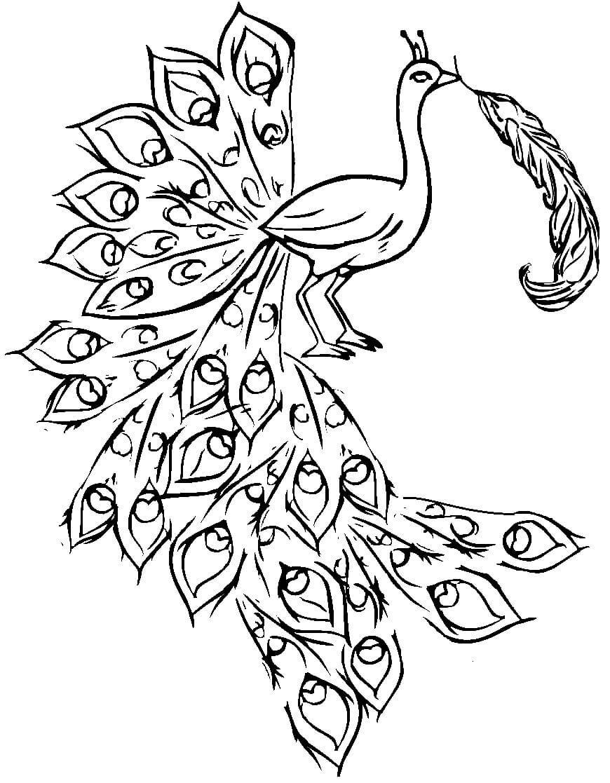 жар-птица без хвоста картинки раскраски будет