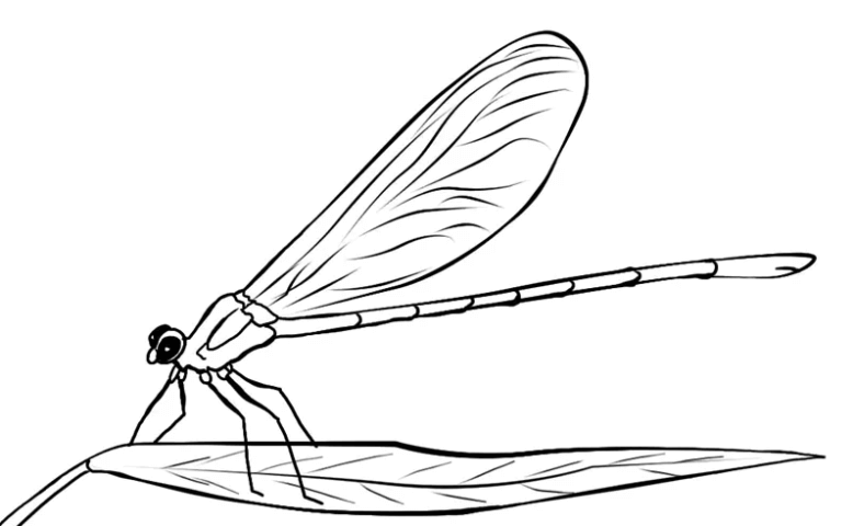Схема шаблон Стрекозы на листике