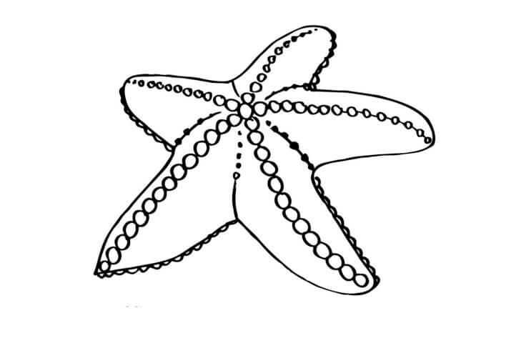 Схема шаблон бумажной морской звезды