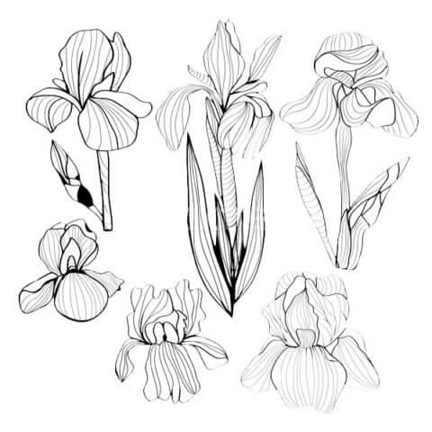 Схема для распечатки в виде цветка