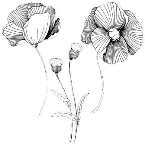 Схема для распечатки в виде цветов